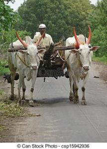man riding a bullock cart