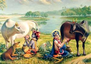 krishna and balarama milking cows